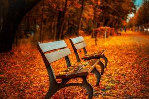 ベンチ、秋