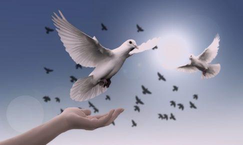 鳩 飛び立つ