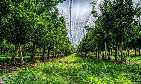 農園、リンゴの木