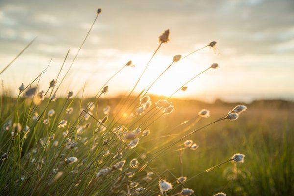 太陽、草原